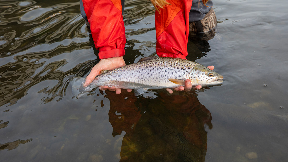 tc-supporting-trout-unlimited-can-1200x675.jpg